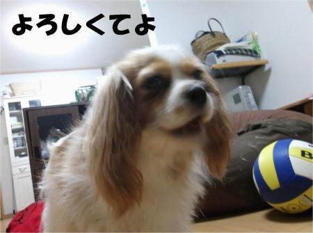 06_convert_20120702175905[1]
