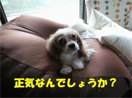 01_convert_20120712175040[1]