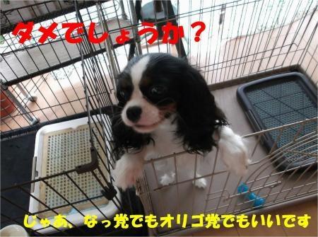 05_convert_20120712175325[1]
