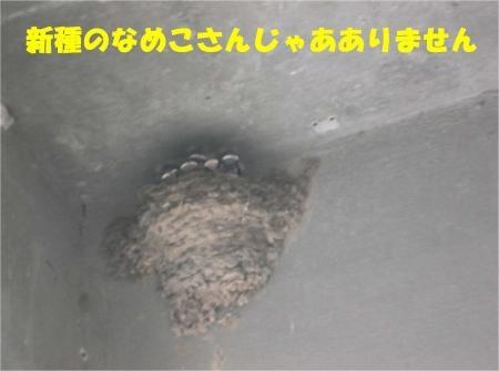 08_convert_20120713172330[1]