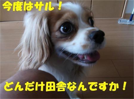 01_convert_20120717175936[1]