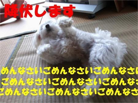 03_convert_20120718180544[1]