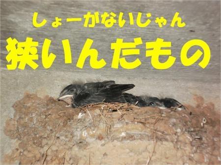 06_convert_20120718180707[1]