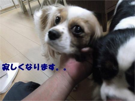 03_convert_20120725175039[1]