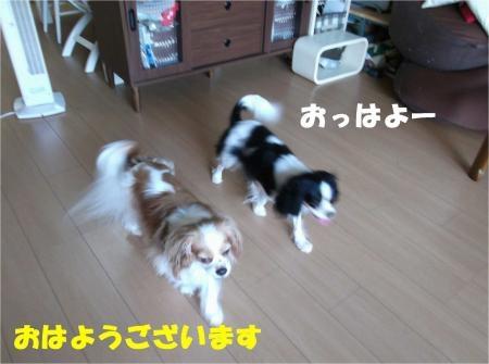 01_convert_20120727175355[1]