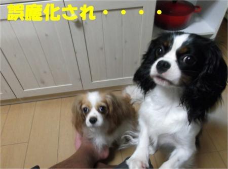 09_convert_20120801175112[1]