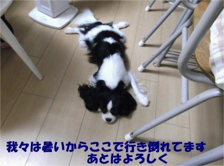 08_convert_20120802173743[1]