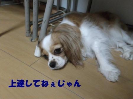 03_convert_20120803173359[1]