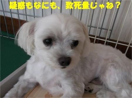 06_convert_20120808174011[1]