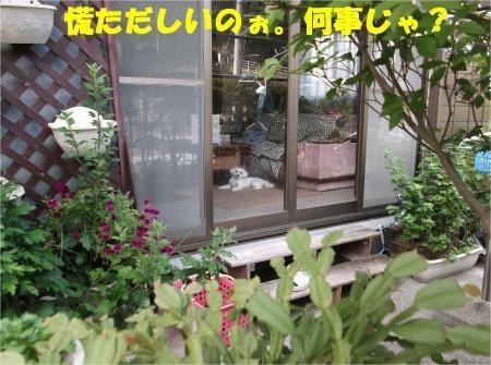 05_convert_20120813162001[1]