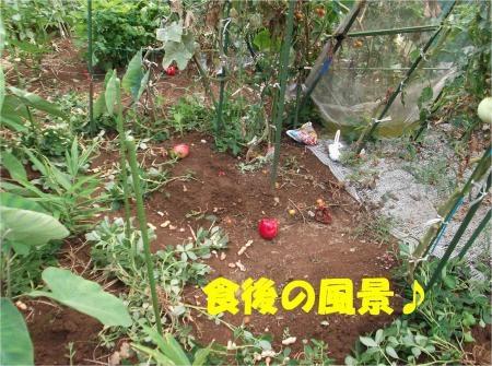 08_convert_20120813162118[1]