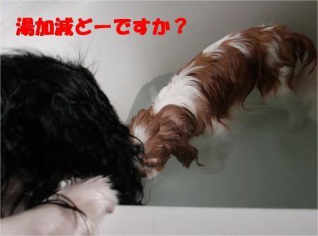09_convert_20120820181332[1]