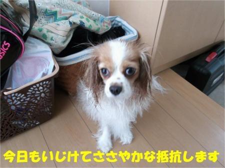 012_convert_20120820181509[1]