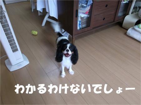 014_convert_20120820181608[1]
