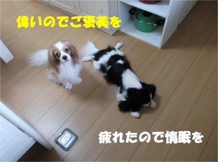 015_convert_20120820181636[1]