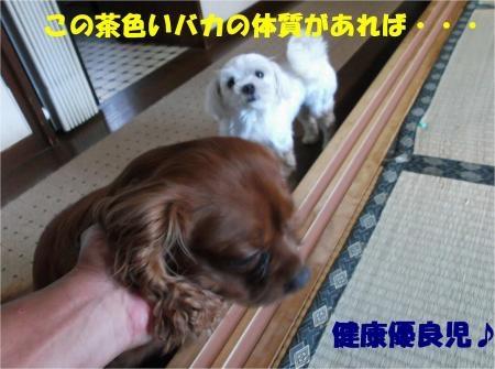 03_convert_20120821180237[1]