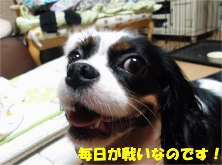 06_convert_20120822175212[1]