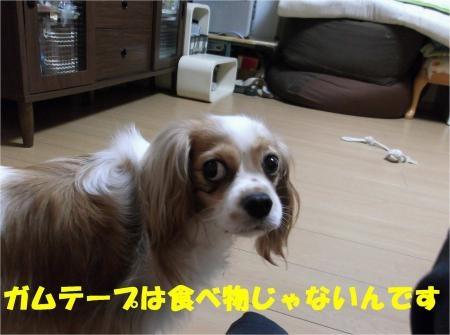 010_convert_20120823174224[1]