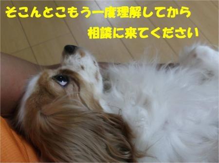 011_convert_20120823174255[1]