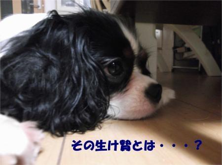 010_convert_20120824182204[1]