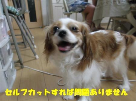 03_convert_20120829183429[1]