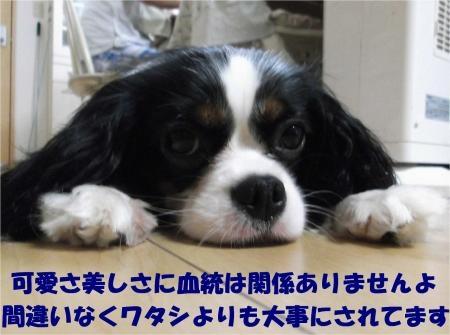 06_convert_20120829183633[1]