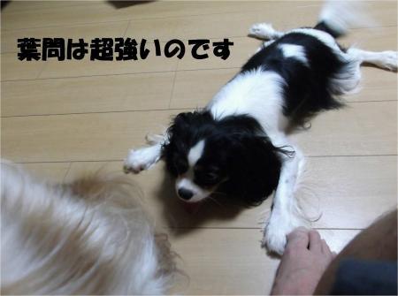 08_convert_20120830175013[1]