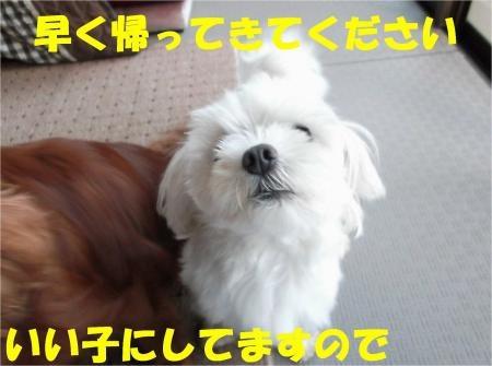 07_convert_20120911175421[1]