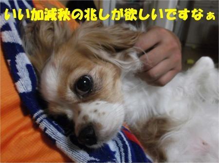 05_convert_20120912182357[1]