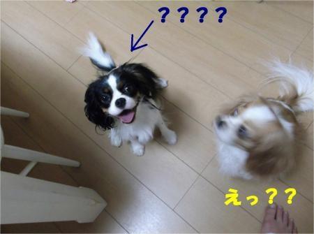 07_convert_20120914181445[1]