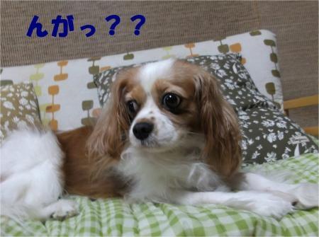 05_convert_20121001173225[1]