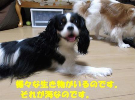 06_convert_20121001173253[1]