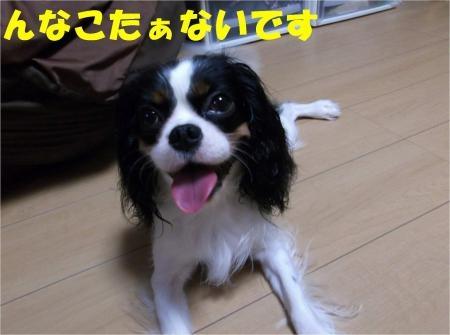 05_convert_20121002175724[1]