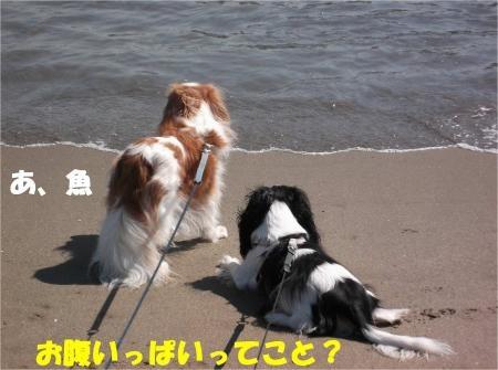 08_convert_20121015174033[1]