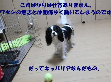 08_convert_20121017182051[1]