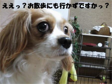 01_convert_20121023173031[1]