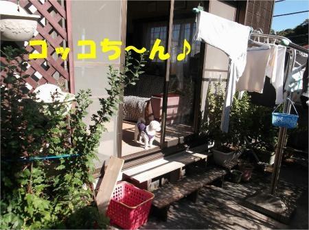 01_convert_20121024174847[1]