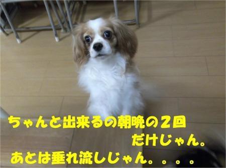 08_convert_20121025180246[1]