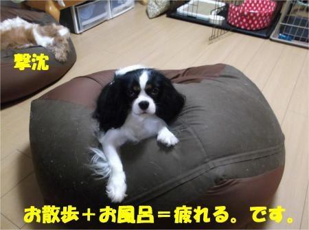 010_convert_20121029173711[1]