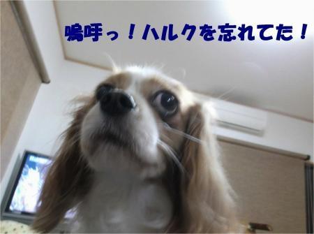 08_convert_20121030173604[1]