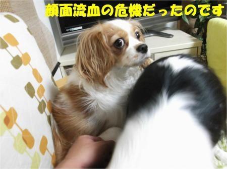 02_convert_20121031173409[1]