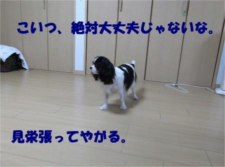 06_convert_20121031173520[1]