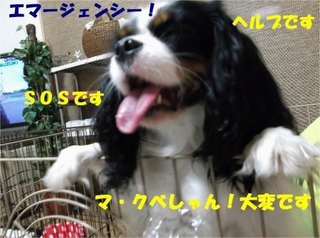 010_convert_20121106180407[1]