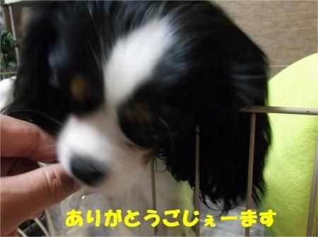 011_convert_20121106180423[1]