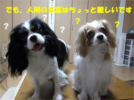06_convert_20121107180523[1]