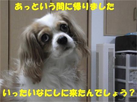 08_convert_20121109173314[1]