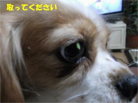 04_convert_20121129164555[1]