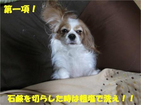09_convert_20121211180050[1]