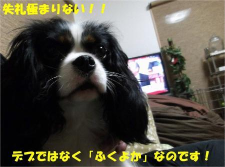 DSCF4753_convert_20121128174721.jpg