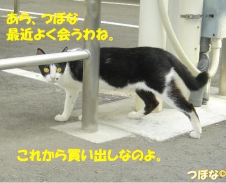 20110827_3.jpg